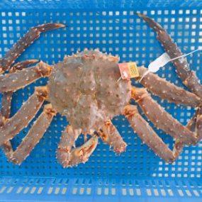 cua-hoang-de-king-crab-mua-o-dau