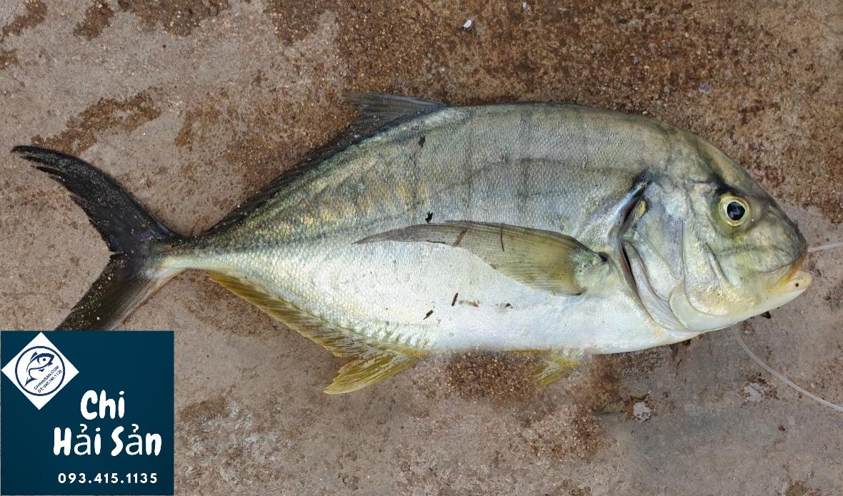 hình ảnh cá bè vàng