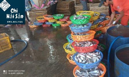 Nguồn thu mua tại cảng cá Lagi - Phan Thiết