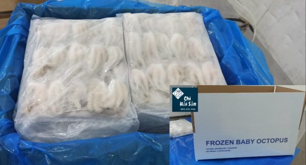 Bạch tuộc baby đông lạnh xuất khẩu