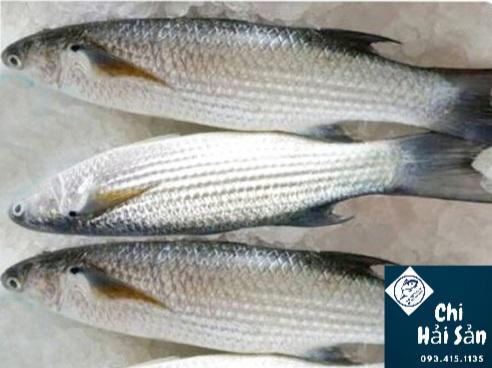 Giá cá đối tại Chihaisan