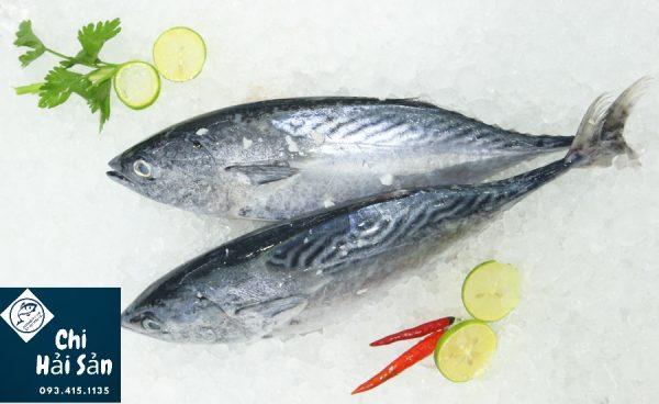 Cá thu ngừ