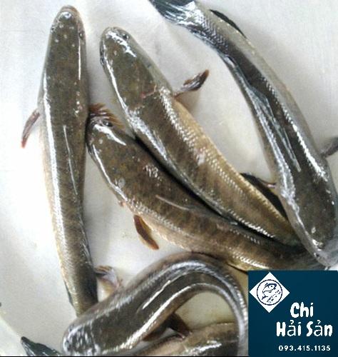 Cá lóc đồng bán tại Chihaisan