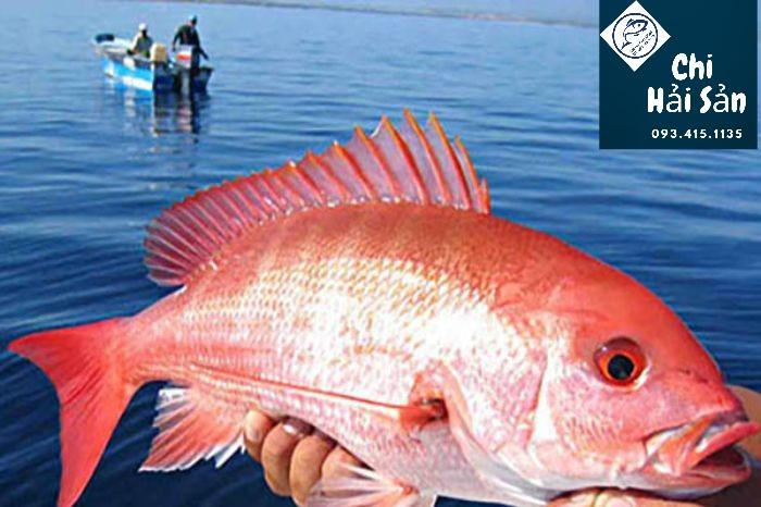 Cá hồng biển  - cá hồng chuối