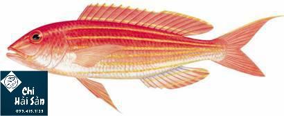 Cá đổng - cá hường biển
