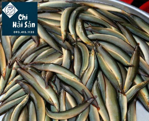 cá chạch tại vựa hải sản quận 1-3-5-7