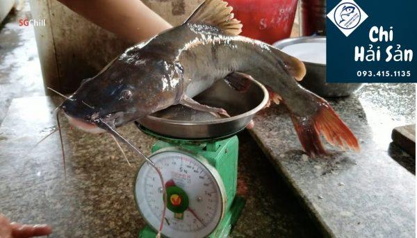 cá lăng đuôi đỏ tự nhiên tại vựa hải sản giá rẻ TPHCM