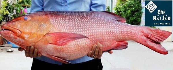 Hình ảnh cá hồng chuối