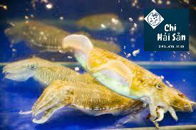 mực nang sống tại Vựa hải sản tươi sống tpHCM
