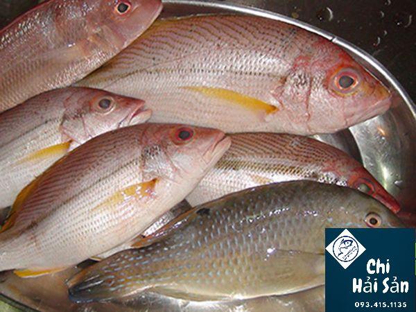 Giá cá róc lớn - Giá bán cá róc tươi