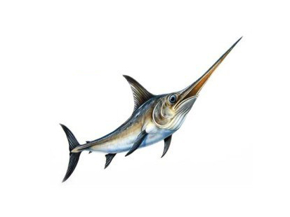 Giá bán cá Kiếm bao nhiêu 1 kg