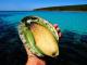 Bào ngư Úc bán ở đâu? Bào ngư Úc uy tín chất lượng