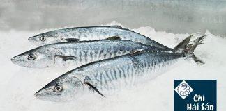 cá thu ảo tại Chihaisan