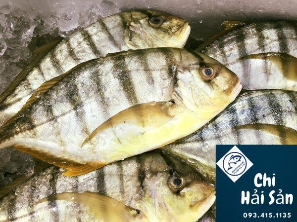 cá bè vàng tại Chihaisan
