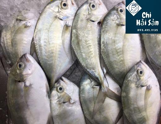 Cá khế vàng bán tại Chihaisan