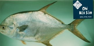 cá khế vàng
