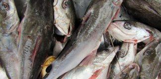 cá giàu dinh dưỡng