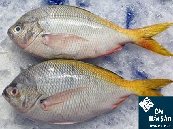 cá chàm vàng