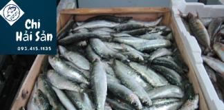 cá bán tại Chiahaisan