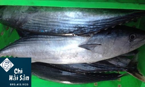 cá thu ngừ nguyên con