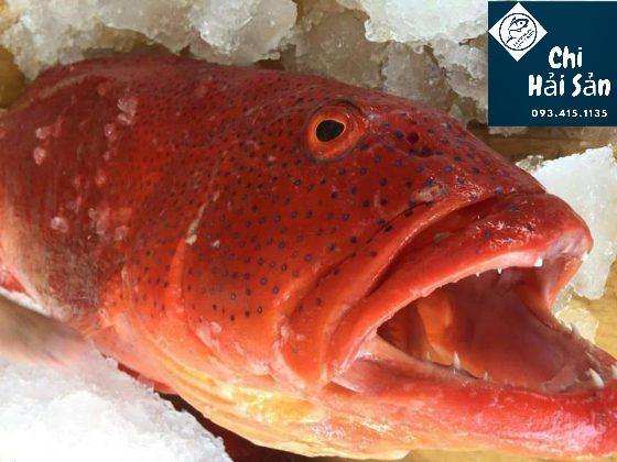 cá mú đỏ bán tại Chihaisan
