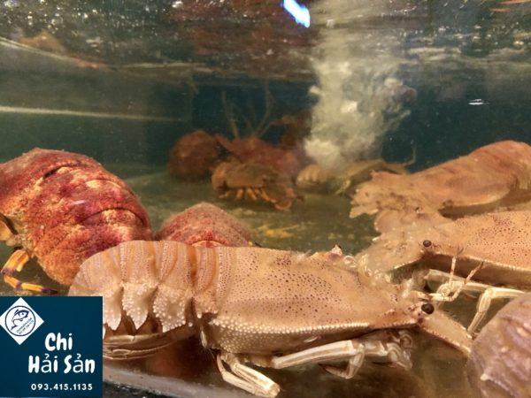 Tôm mũ ni đỏ còn bơi tại Chihaisan