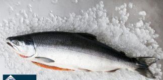 cá hồi Nauy nhập khẩu