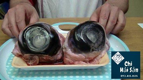 Mắt cá ngừ - đèn pha biển
