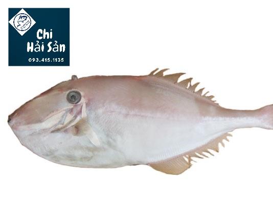 Cá bò da - cá bò giấy - cá bò dép
