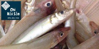 Cá bống đục - cá bống - cá đục