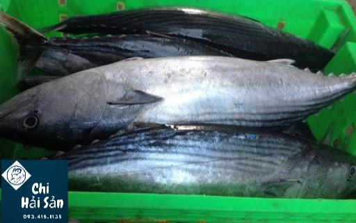 Cá thu ngừ bán tại Chihaisan