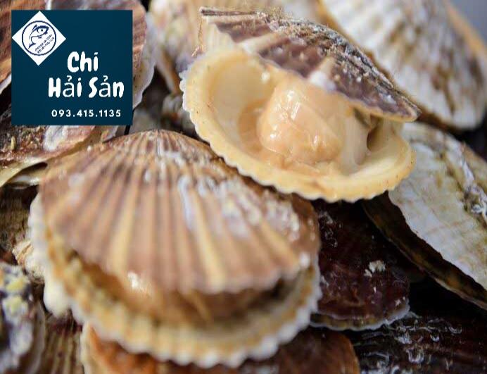 Sò điệp tươi TPHCM tại vựa hải sản tươi sống tại HCM